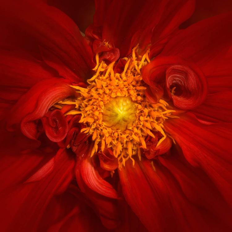 Inner-Critic-feedback-power-